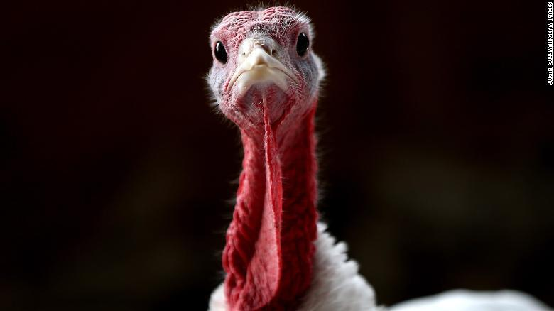 Thanksgiving trivia quick facts